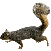 Squirrel Png Picture PNG Image