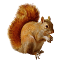 Squirrel Png Clipart PNG Image