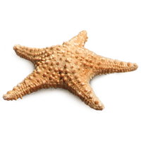 download starfish free png photo images and clipart killer whale clip art word killer whale clipart black and white