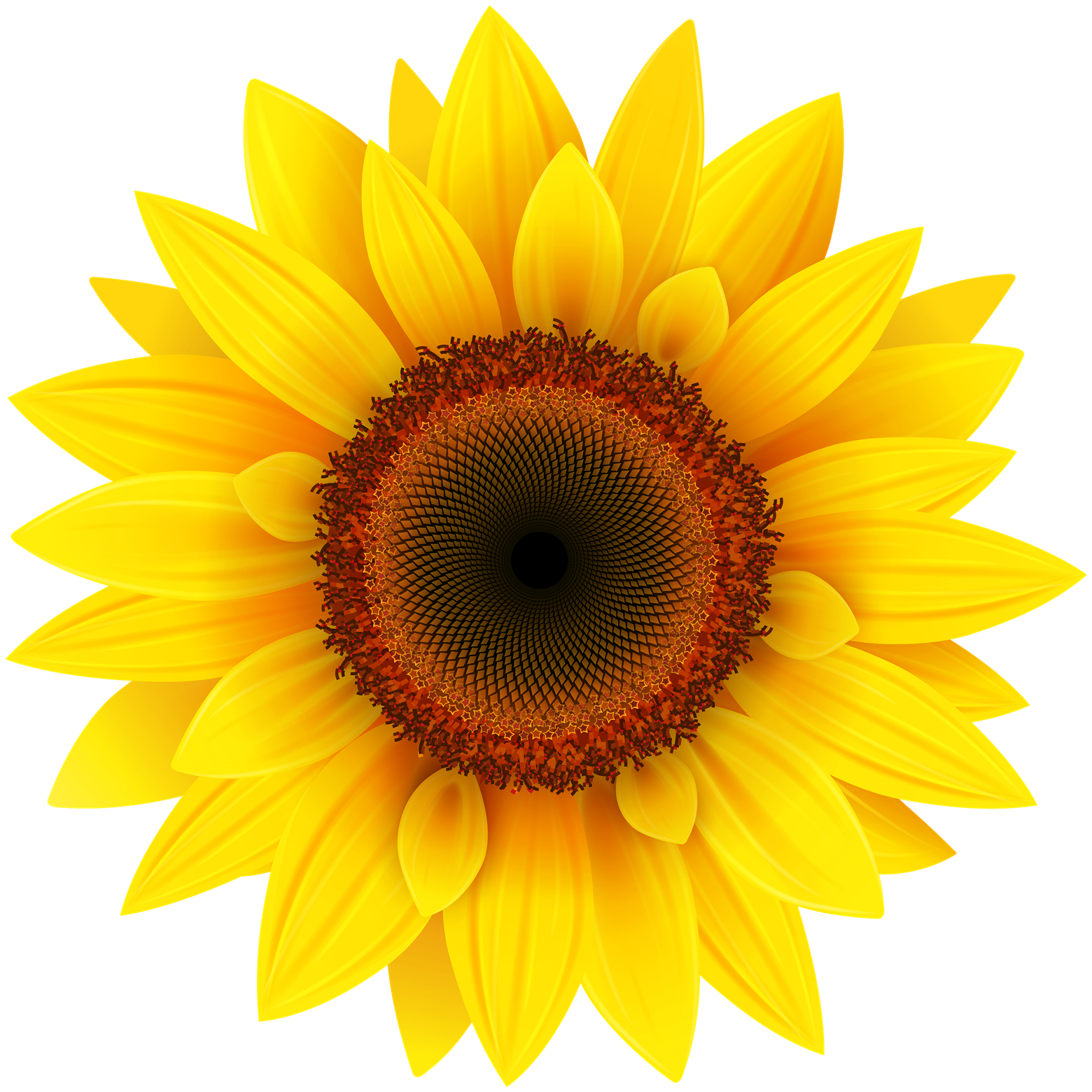 Image result for sunflower transparent