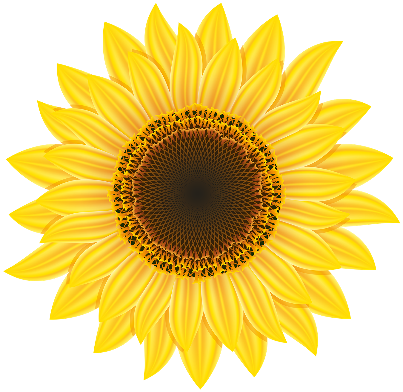 Sunflower Image PNG Image