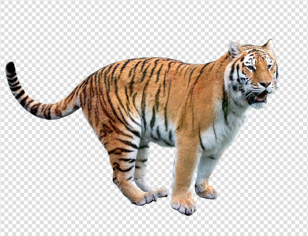 Tiger Png Pic PNG Image