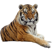 Tiger Png Image Download Tigers<B>素材格式</B>: PNG<B>素材尺寸</B>: 315x272<B>檔案大小</B>: 38.6KB<B>推薦人數</B>: 1,703