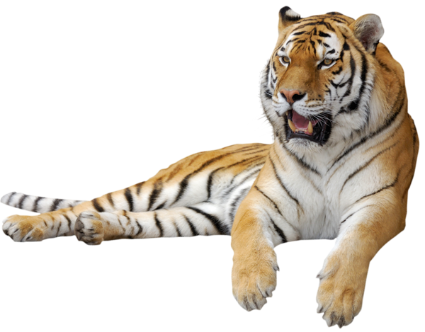 Tiger Png Picture PNG Image