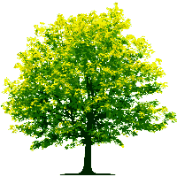 Download tree free png photo images and clipart freepngimg - Tree images free download ...