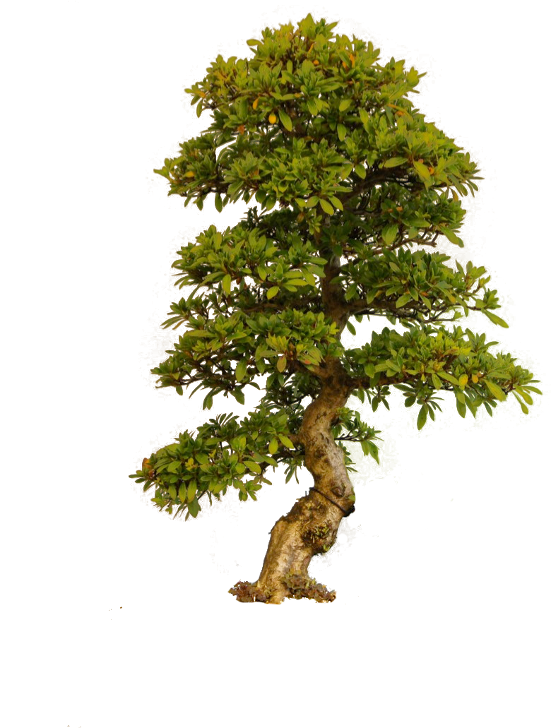 Old Tree PNG Image