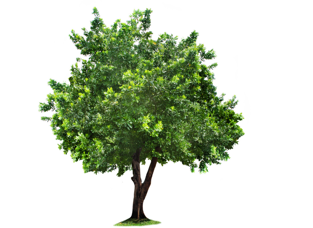 Beautiful Tree PNG Image