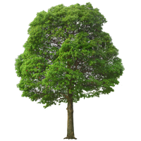 Green Tree PNG Image
