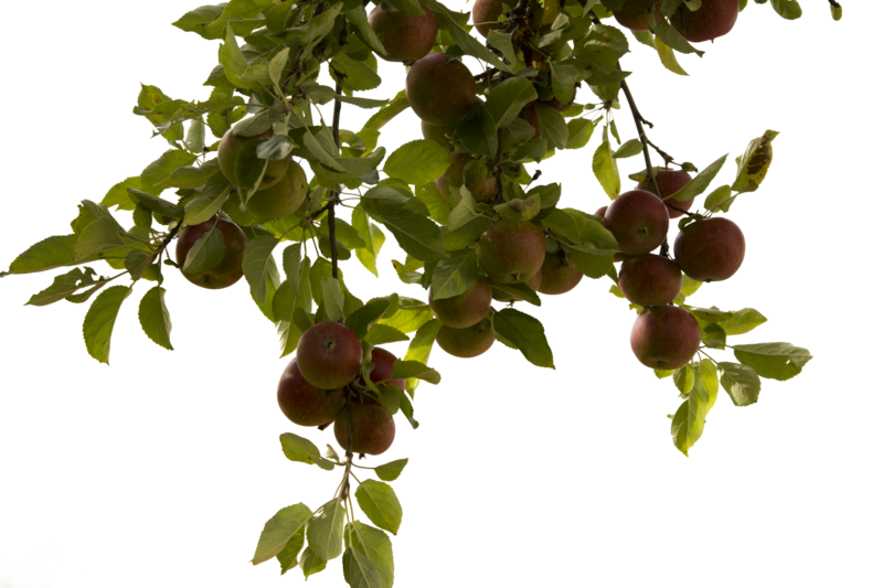 Tree Branch Photos PNG Image