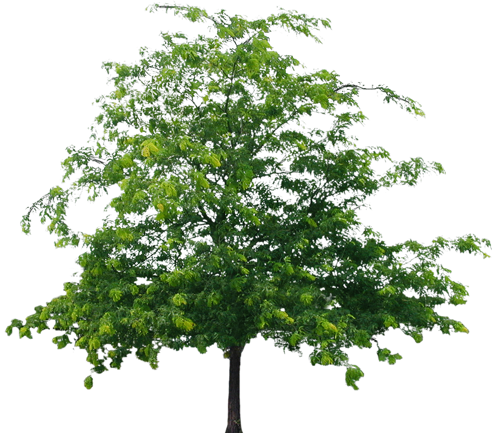 Tree File PNG Image