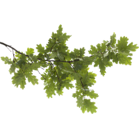 Tree Branch Transparent Image PNG Image