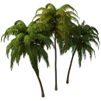 Coconut Tree Photos PNG Image