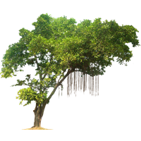 Jungle Tree Image PNG Image