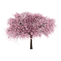 Cherry Tree PNG Image