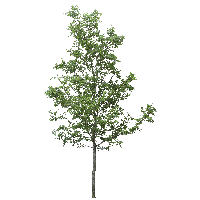 download tree free png photo images and clipart freepngimg sunshine clipart free sunshine clip art animated free