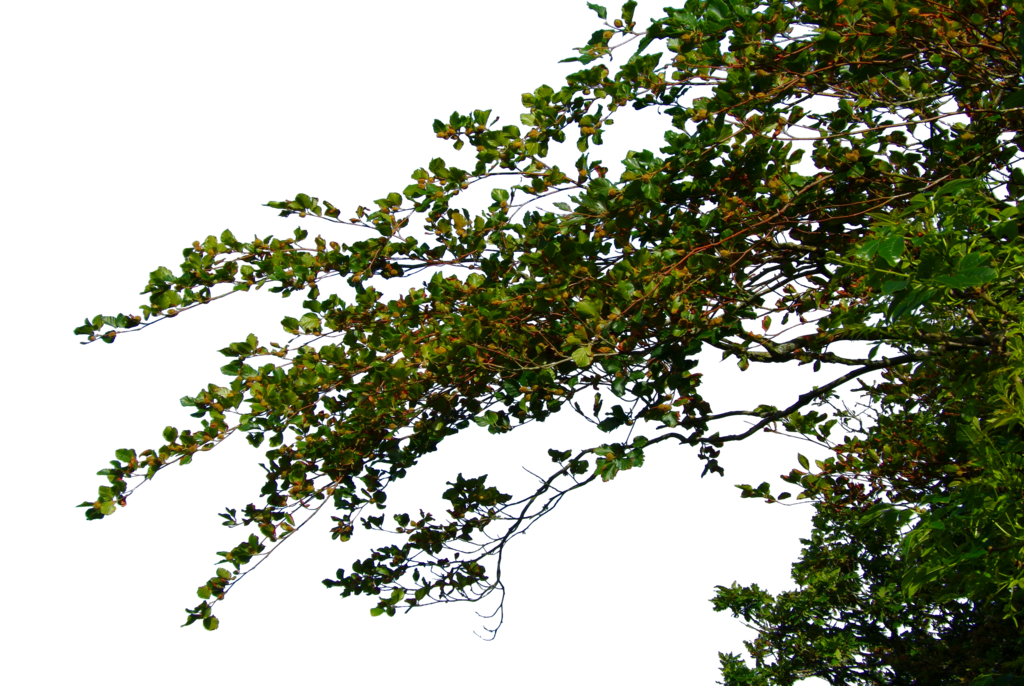 Tree Leaves File PNG Image