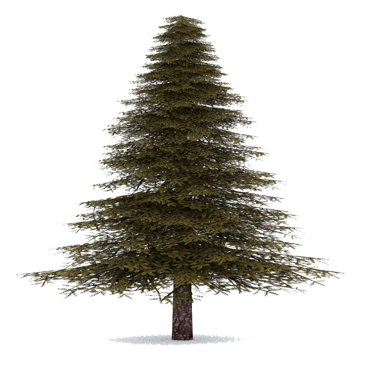 Fir-Tree Image PNG Image