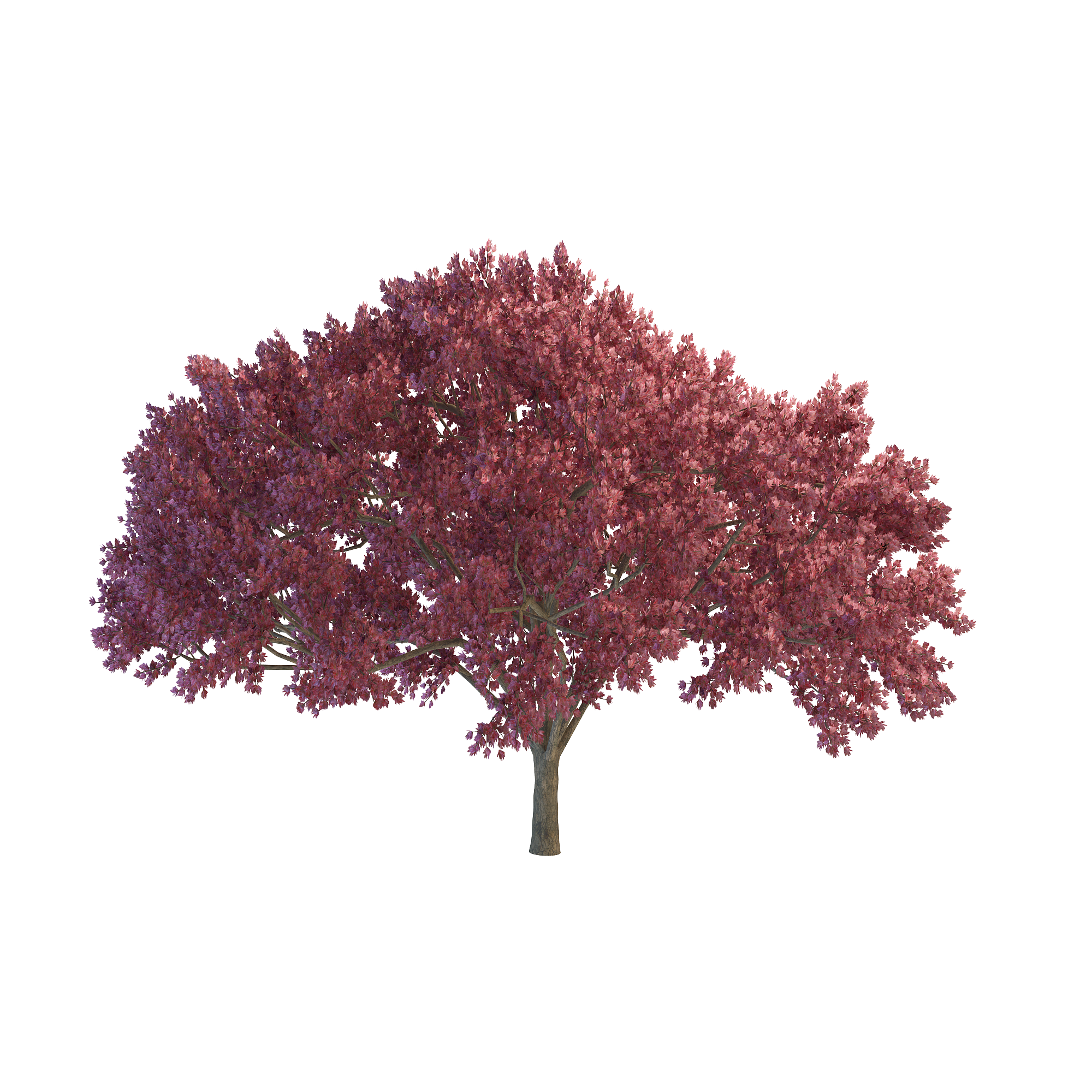 Cherry Tree File PNG Image