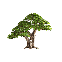 Download Tree Free Png Photo Images And Clipart Freepngimg