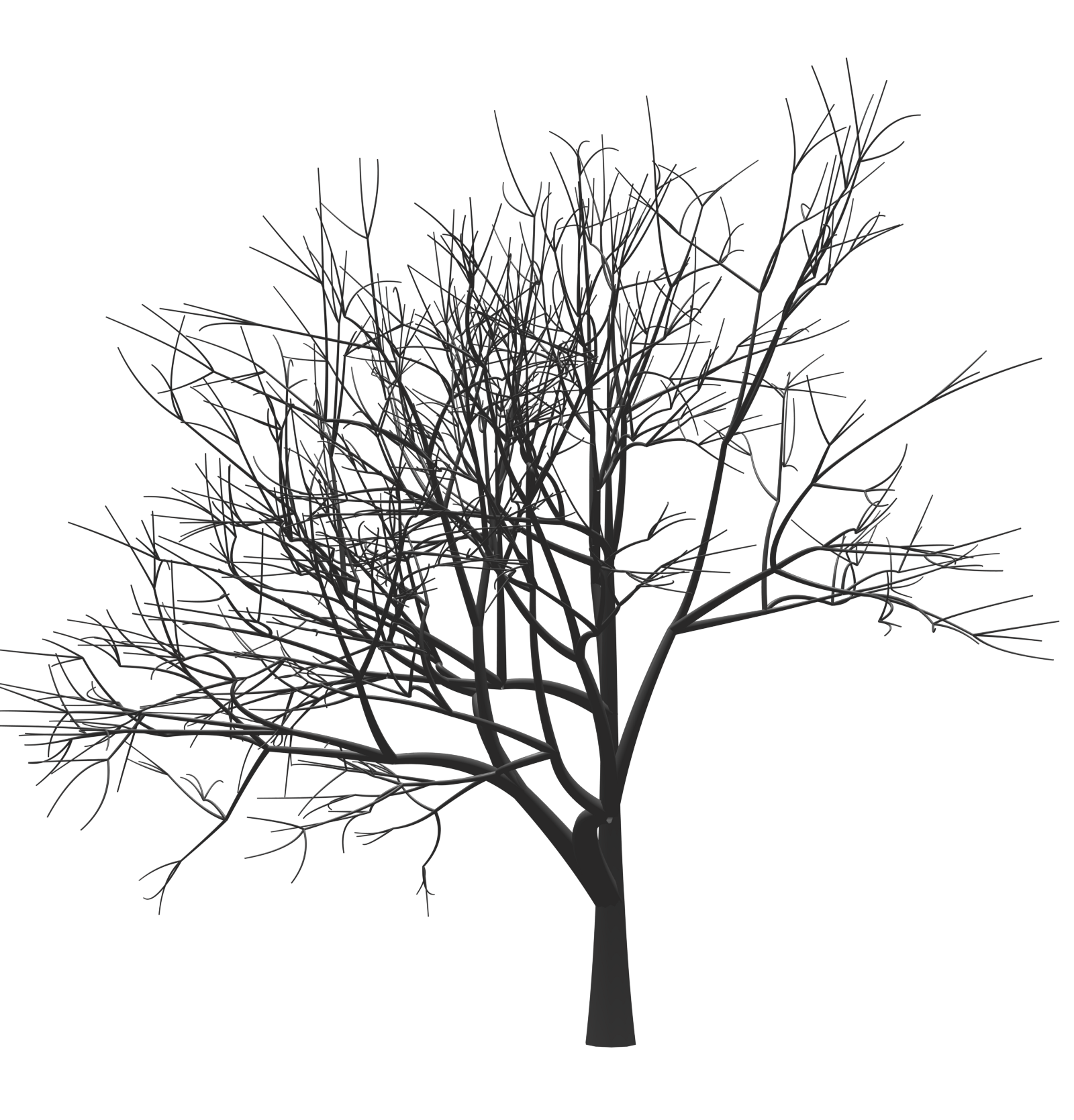Plant Tree Mark Zuckerberg Monochrome Woody Twig PNG Image