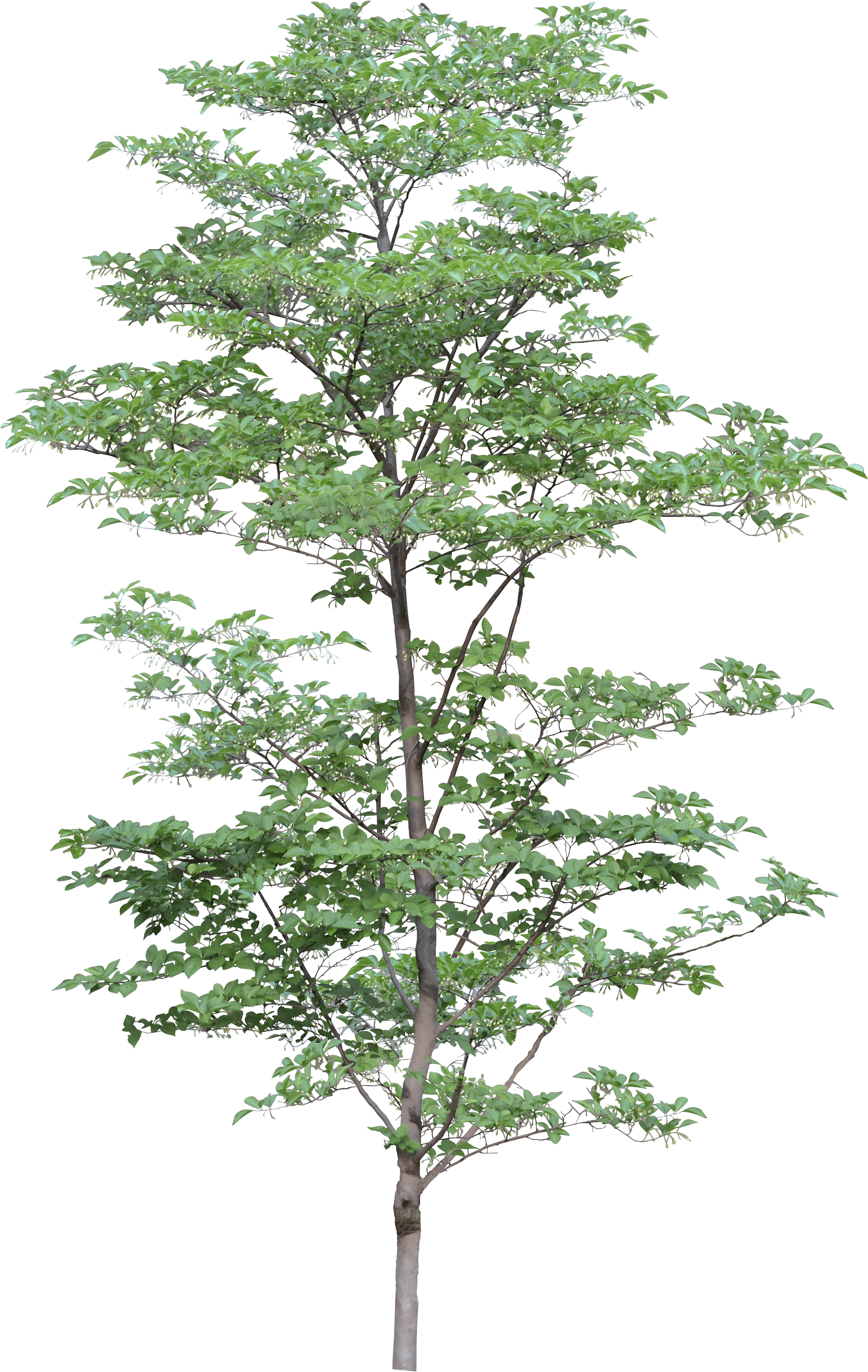 Tree Png Image PNG Image
