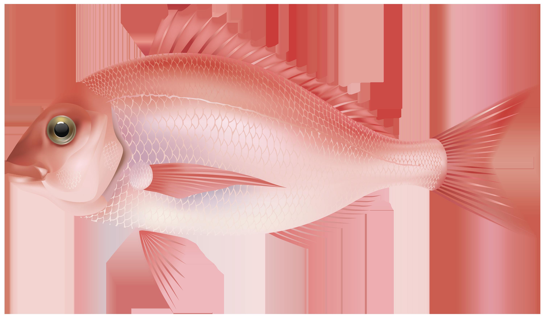 Download Fish Png 7 Hq Png Image Freepngimg Including transparent png clip art. download fish png 7 hq png image
