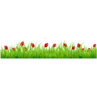 Tulip Png PNG Image