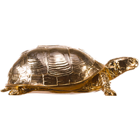 Box Turtle Picture PNG Image