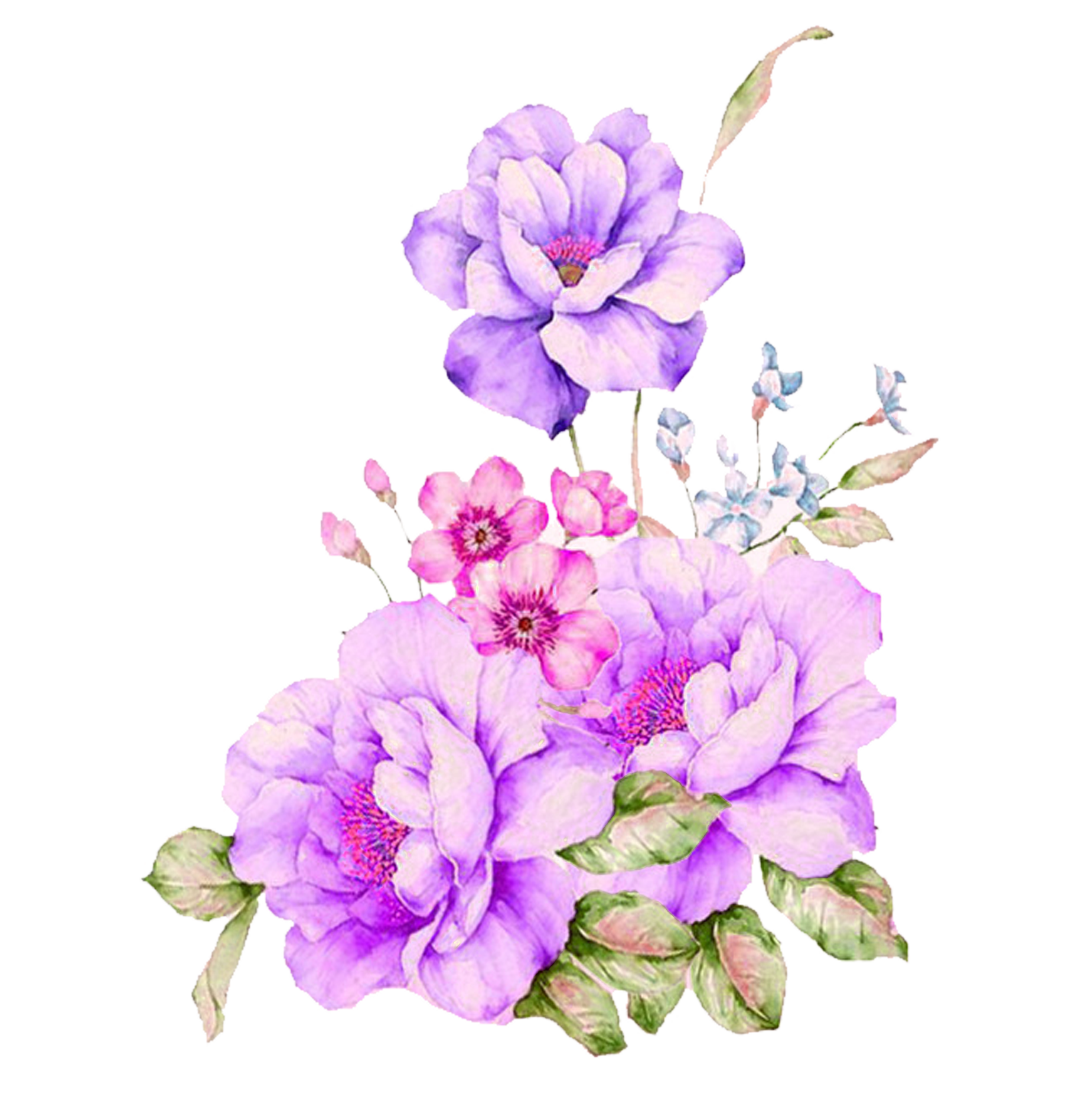 Plant Flower Watercolour Watercolor Flowers Painting PNG Image