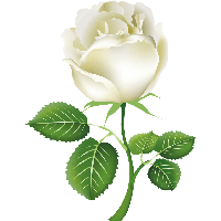 download white roses free png photo images and clipart freepngimg rh freepngimg com black and white rose clipart free pink and white rose clipart