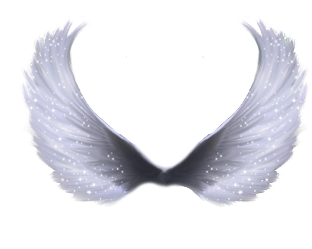 Download Wings HQ PNG Image
