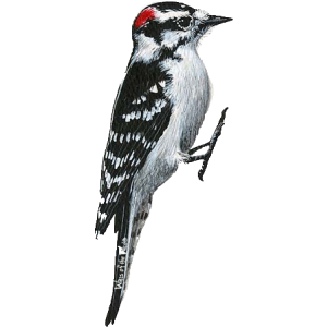 Woodpecker Png Clipart PNG Image