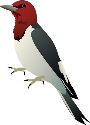 Woodpecker Transparent PNG Image