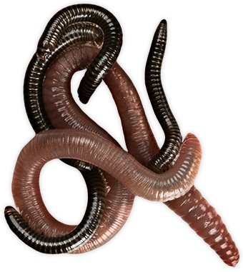 Worms Png Pic PNG Image