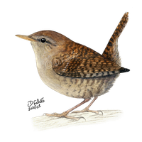 Wren Png Clipart PNG Image
